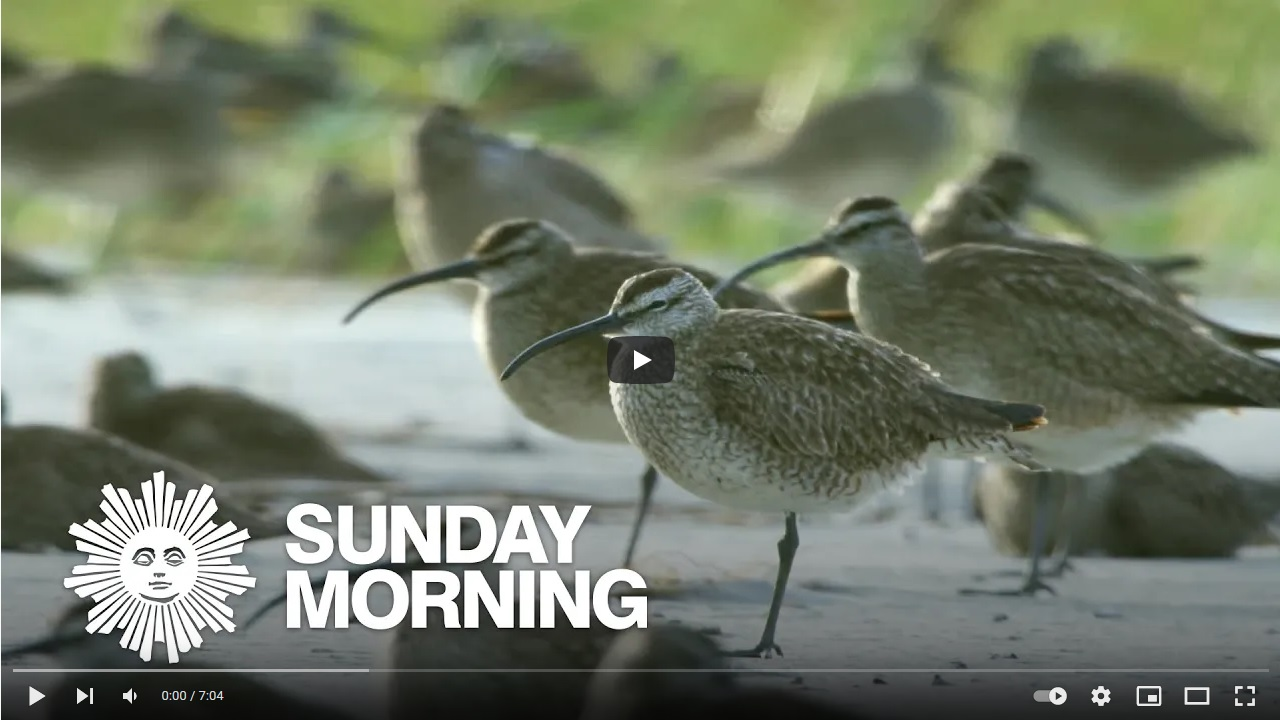 Production sound cover image of whimbrels off the coast of South Carolina